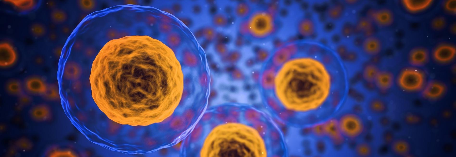 Karnozyna – w badaniach naukowych