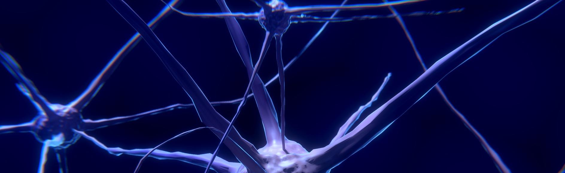 Regulujący wpływ karnozyny na układ nerwowy